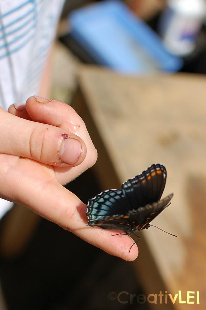 butterfly on Evan's finger