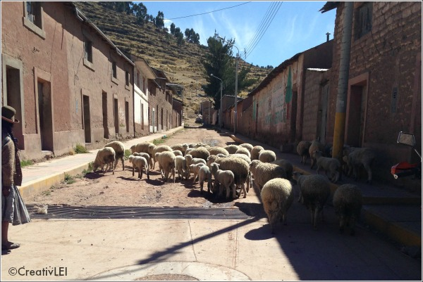 sheep in Chupa