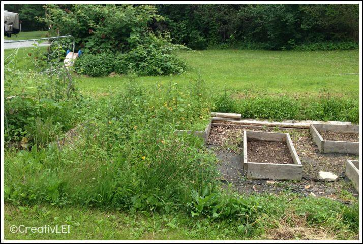 reclaiming an overgrown square foot garden box by box