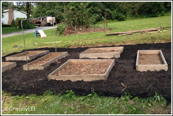 Using mulch to control weeds around raised square foot garden beds