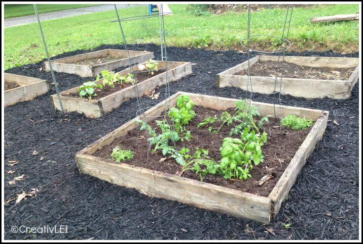 Pizza garden in a raised bed square foot garden